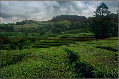 Čajová plantáž A - 40x60 - dřevo