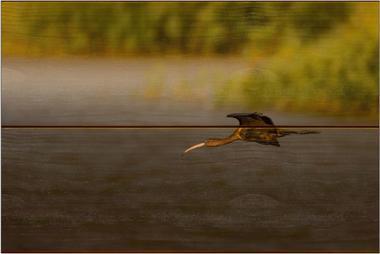 Ibis hnědý C - 20x30 - dřevo