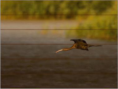 Ibis hnědý C - 60x80 - dřevo
