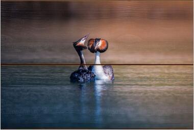 Potápka roháč G - 20x30 - dřevo