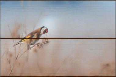 Stehlík obecný I - 20x30 - dřevo