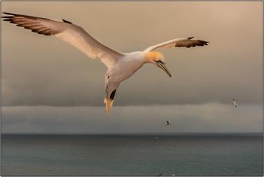 Terej bílý J - 60x90 - plátno