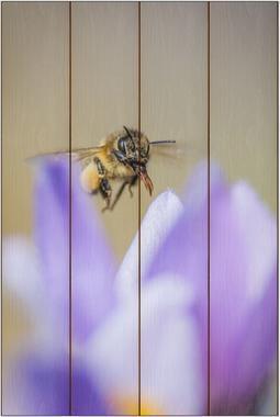 Včela medonosná E - 40x60 - dřevo