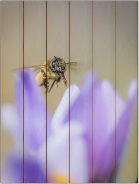 Včela medonosná E - 60x80 - plátno