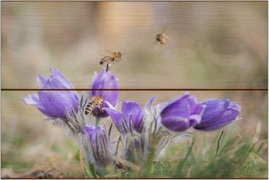 Včela medonosná G - 20x30 - dřevo