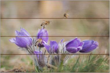 Včela medonosná G - 40x60 - dřevo
