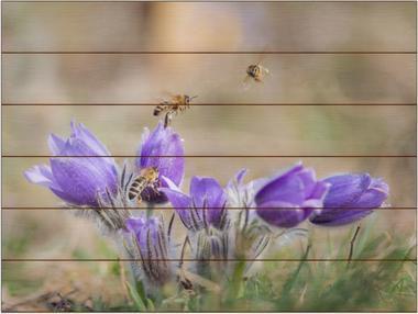 Včela medonosná G - 60x80 - dřevo
