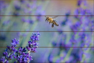 Včela medonosná H - 40x60 - dřevo