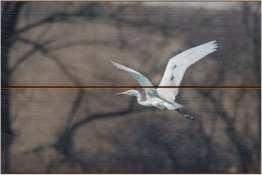Volavka bílá E - 20x30 - dřevo