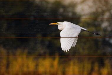 Volavka bílá E - 40x60 - dřevo