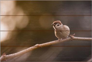Vrabec domácí C - 40x60 - dřevo