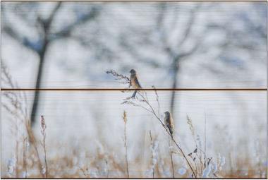 Zimní ptáci A - 20x30 - dřevo
