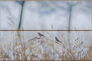 Zimní ptáci B - 20x30 - dřevo