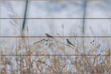 Zimní ptáci B - 40x60 - dřevo