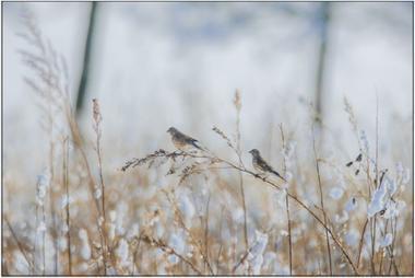Zimní ptáci B - 40x60 - plátno