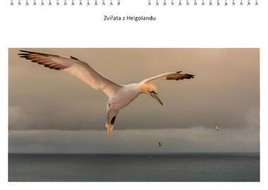 Kalendář A3 Zvířata z Helgolandu 2021 A