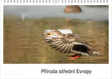Kalendář A3 Příroda střední Evropy 2021 D