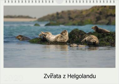 Kalendář A3 Zvířata z Helgolandu 2021 D