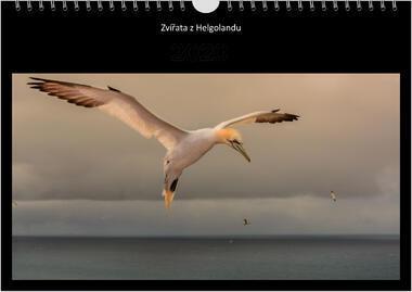 Kalendář A3 Zvířata z Helgolandu 2021 B