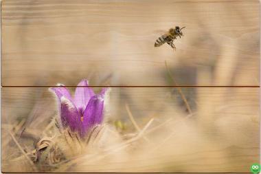 Včela medonosná B - 20x30 - dřevo