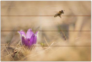 Včela medonosná B - 40x60 - dřevo