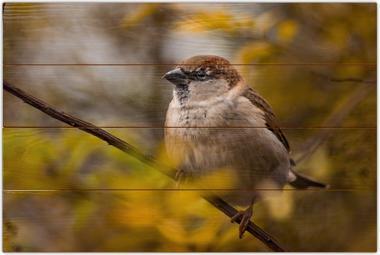 Vrabec domácí A - 40x60 - dřevo