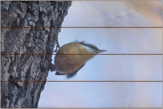 Brhlík lesní A - 40x60 - dřevo