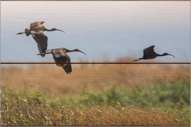 Ibis hnědý A - 20x30 - dřevo