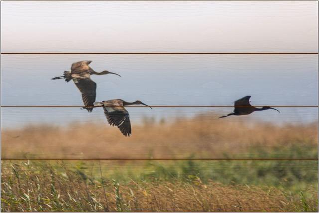 Ibis hnědý A - 40x60 - dřevo