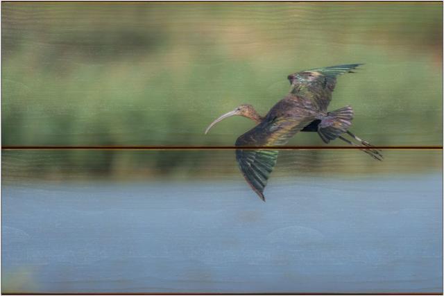 Ibis hnědý B - 20x30 - dřevo