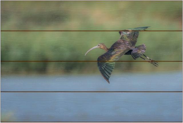 Ibis hnědý B - 40x60 - dřevo