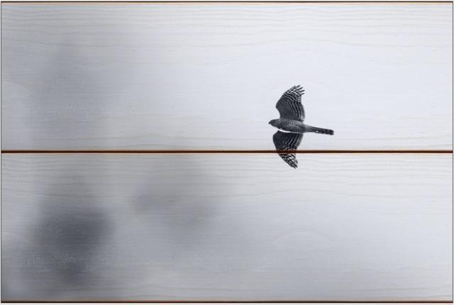 Krahujec obecný A - 20x30 - dřevo
