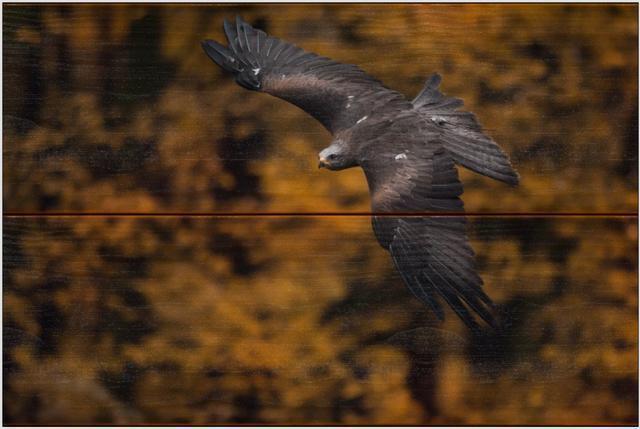 Luňák hnědý A - 20x30 - dřevo