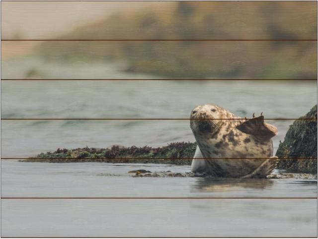 Tuleň kuželozubý D - 60x80 - dřevo