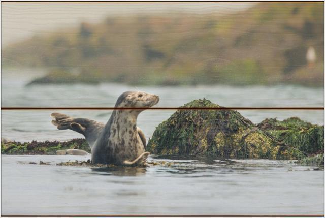 Tuleň kuželozubý I - 20x30 - dřevo