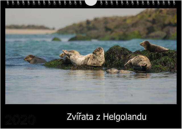 Kalendář A4 Zvířata z Helgolandu 2021 C - 1