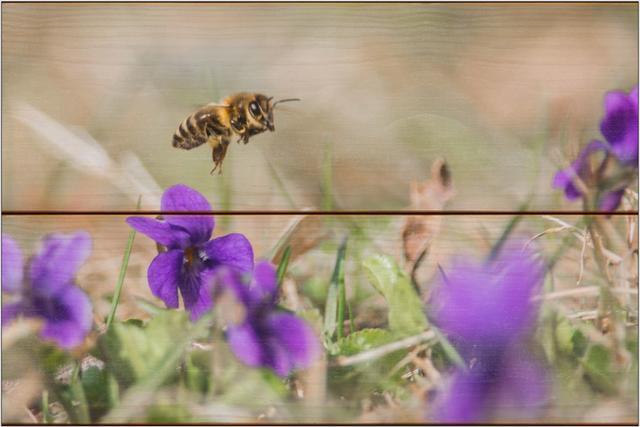 Včela medonosná C - 20x30 - dřevo