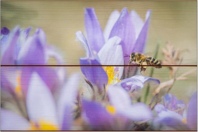 Včela medonosná D - 20x30 - dřevo