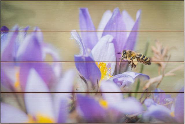 Včela medonosná D - 40x60 - dřevo