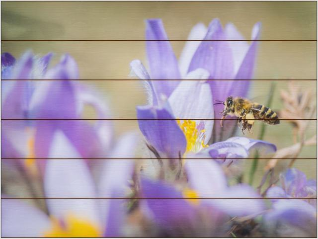 Včela medonosná D - 60x80 - dřevo