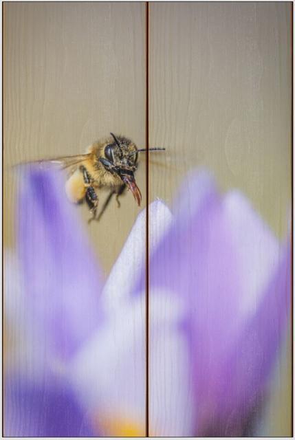 Včela medonosná E - 20x30 - dřevo