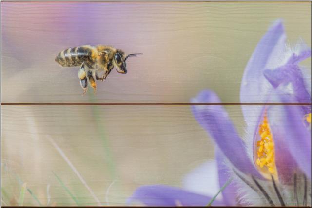 Včela medonosná F - 20x30 - dřevo