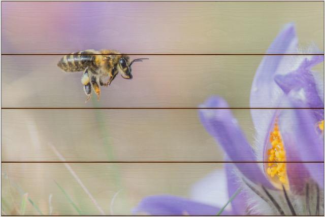 Včela medonosná F - 40x60 - dřevo