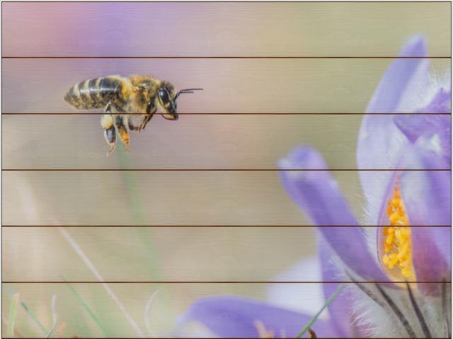 Včela medonosná F - 60x80 - dřevo