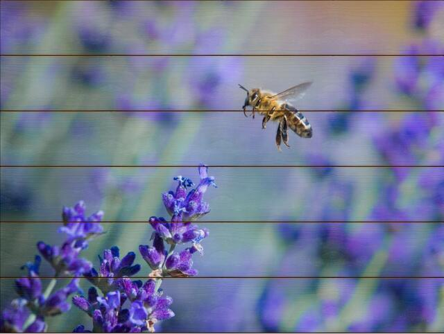 Včela medonosná H - 60x80 - dřevo