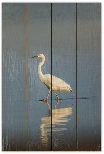 Volavka bílá D - 40x60 - dřevo
