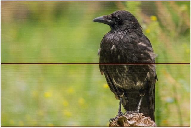 Vrána černá A - 20x30 - dřevo