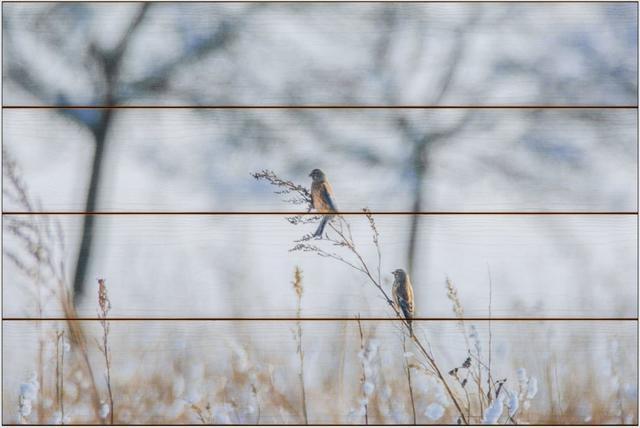 Zimní ptáci A - 40x60 - dřevo