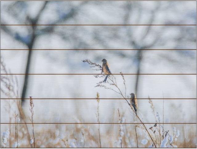 Zimní ptáci A - 60x80 - dřevo