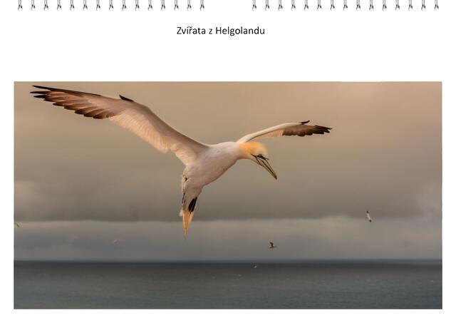 Kalendář A4 Zvířata z Helgolandu 2022 A - 1